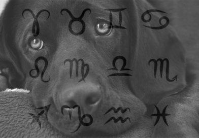 Какую породу собак стоит выбрать каждому знаку Зодиака