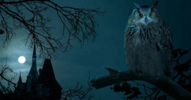 Лунный день 16 ноября