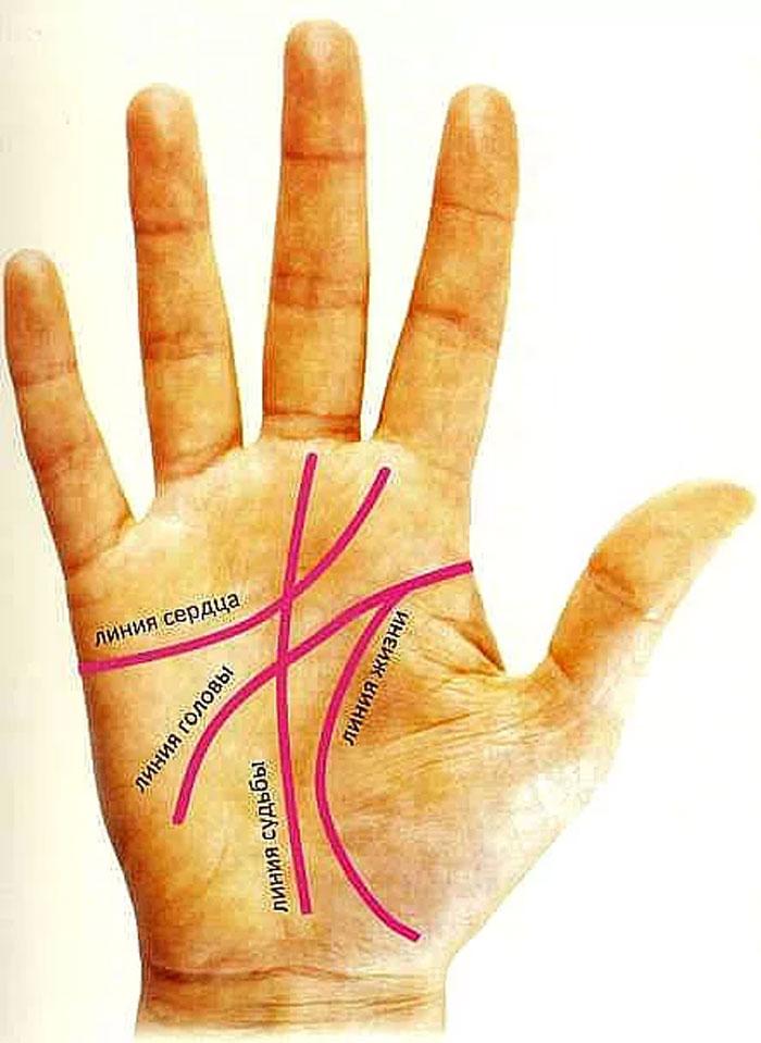 Картинка линия жизни на ладони на какой руке