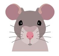 Фэн-шуй на 2020 год: что приготовила Белая Крыса?