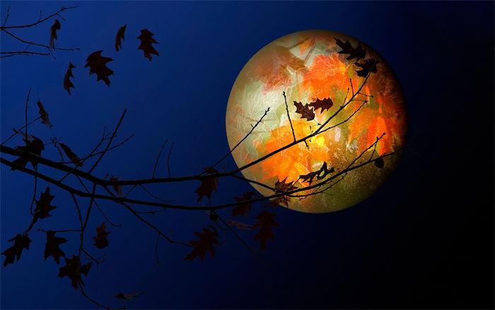 Астрология и домашние растения - советы по уходу по Лунному календарю на 2020 год