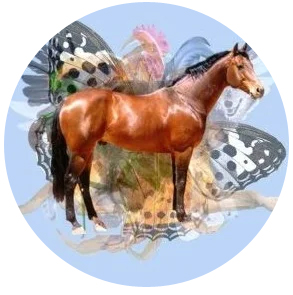 Фэн-шуй прогноз на июнь 2021 года: Лошадь требует решительных действий